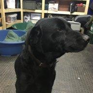 Blackdog