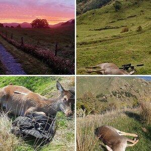 General NZ hunting