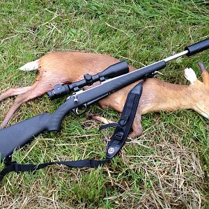 Muntjac from the high seat...