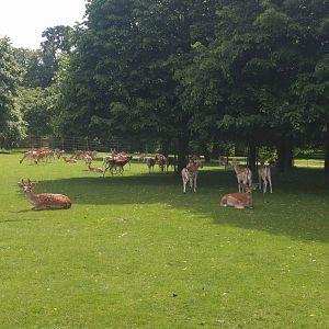 Herd looking good