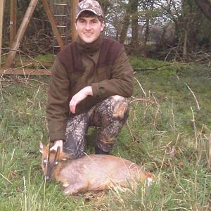 my first muntjac