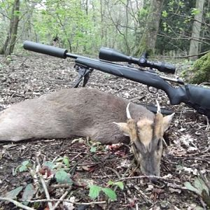 Nice Rep Muntjac Buck taken on the Castle grounds.