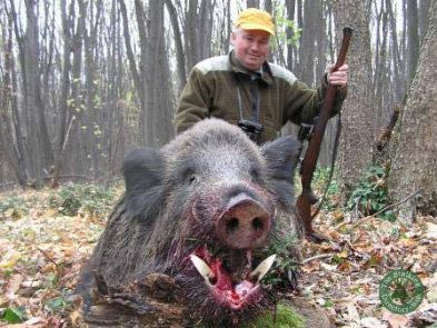 A good size wild boar  | The Stalking Directory